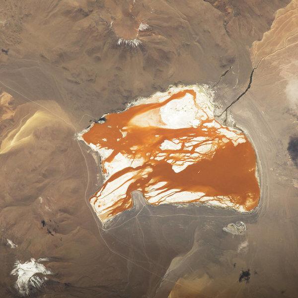 Słone jezioro Laguna Colorada w Boliwii
