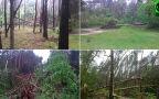 Połamane drzewo w Ostrowie Lubelskim