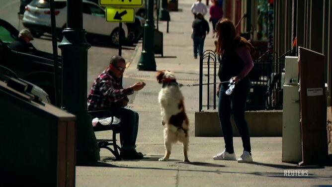 """Ten pies chodzi na dwóch łapach. """"Dla nas to jest całkowicie normalne"""""""